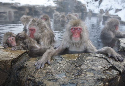 Day Tour Snow Monkey