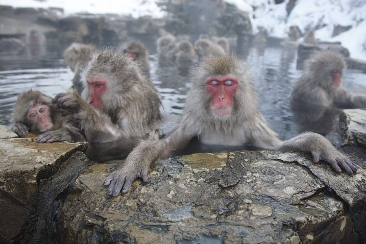 Day Tour Snow Monkey